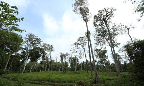 kepupusan hutan